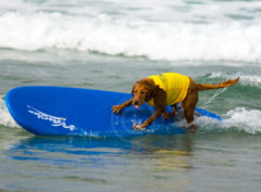 Surf Dog - Riding the Rail