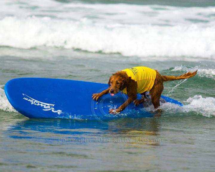 Surf Dog Riding The Rail Water Dancer Photos