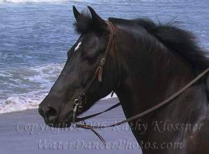 Morgan Head Horse on Beach