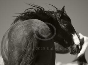 Wild Stallion Nevada