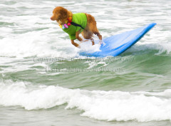 Surf Dog - Outta Here
